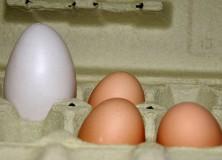 Eggs Shell Overcome