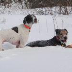1502_snowshoeingdogs_006