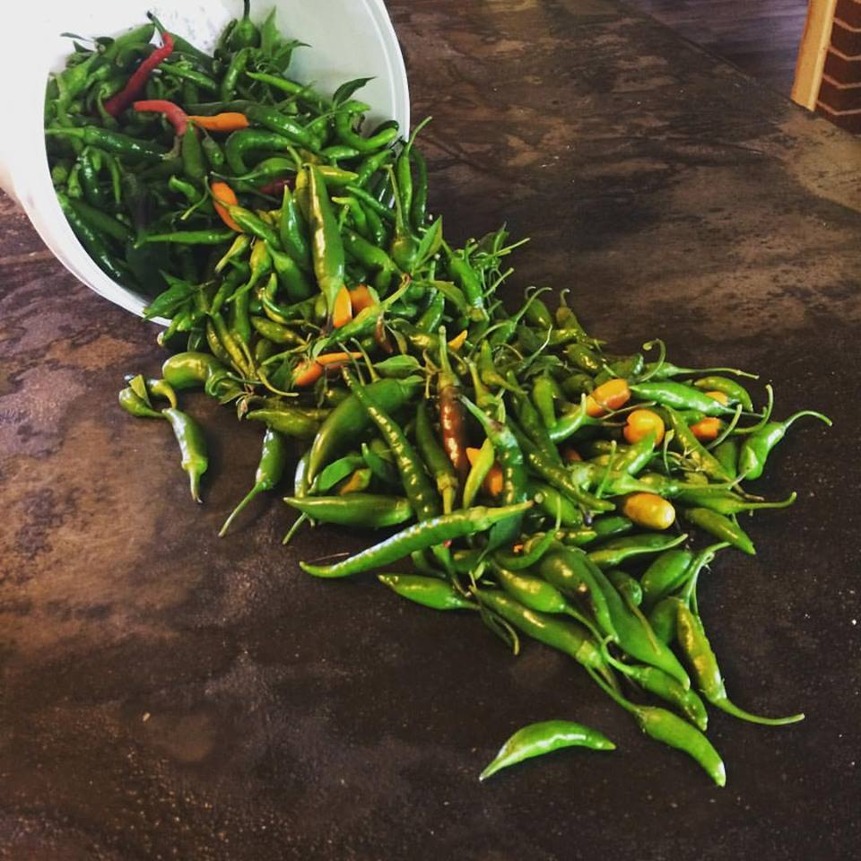 Holy Hot Peppers!