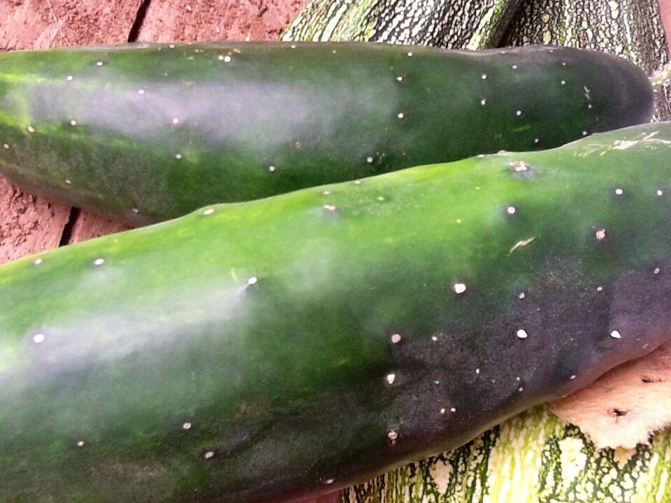 Cucumber Overload!