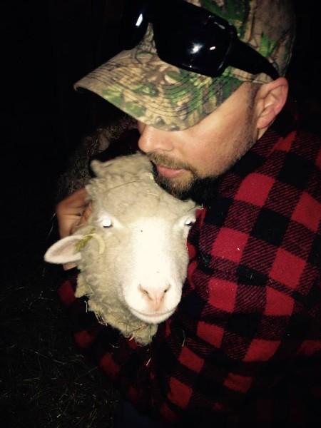 Dumb as a…sheep?